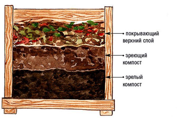 Созревающий компост