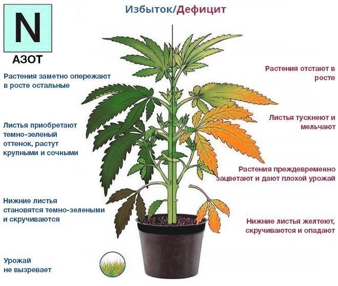 Влияние азота на растения