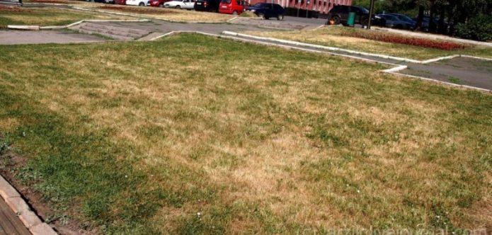 Засыхающий газон