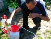 Зелёное мыло – препарат для защиты растений от вредителей