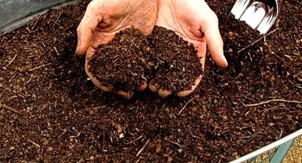 Органика для гортензии