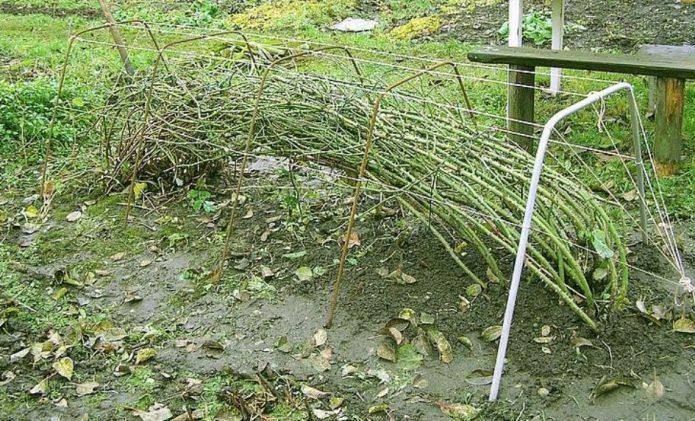 Подготовка плетистых роз к укрытию на зиму