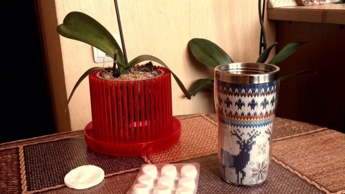 Таблетки янтарной кислоты на столе