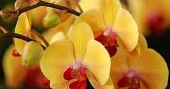 орхидея удобрать