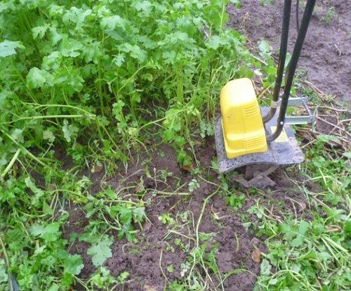 Заделывание сидерата в почву