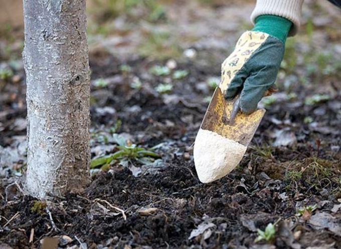 Внесение доломитовой муки под дерево