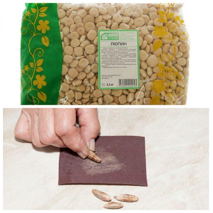 скарификация семян