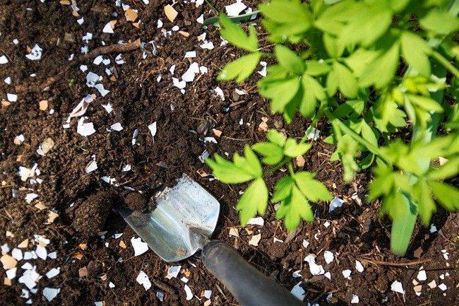 Скорлупа в почве