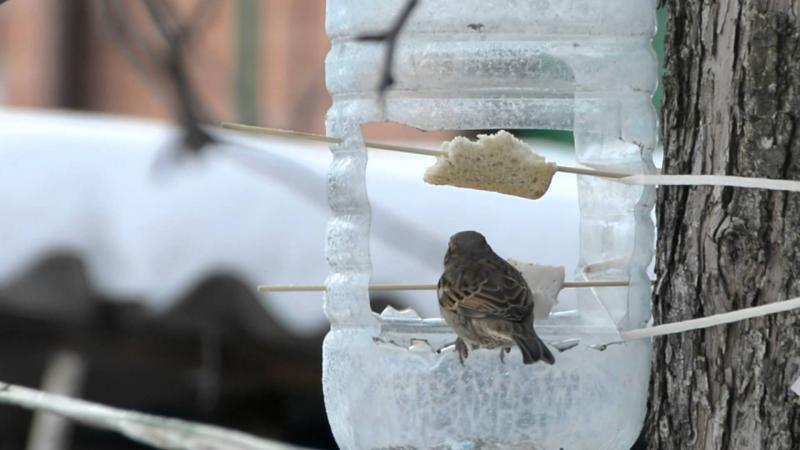 post_5bbd751d144e6 Кормушка для птиц из пластиковой бутылки