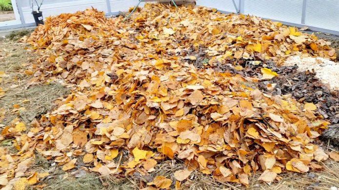 Мульчирование листьями