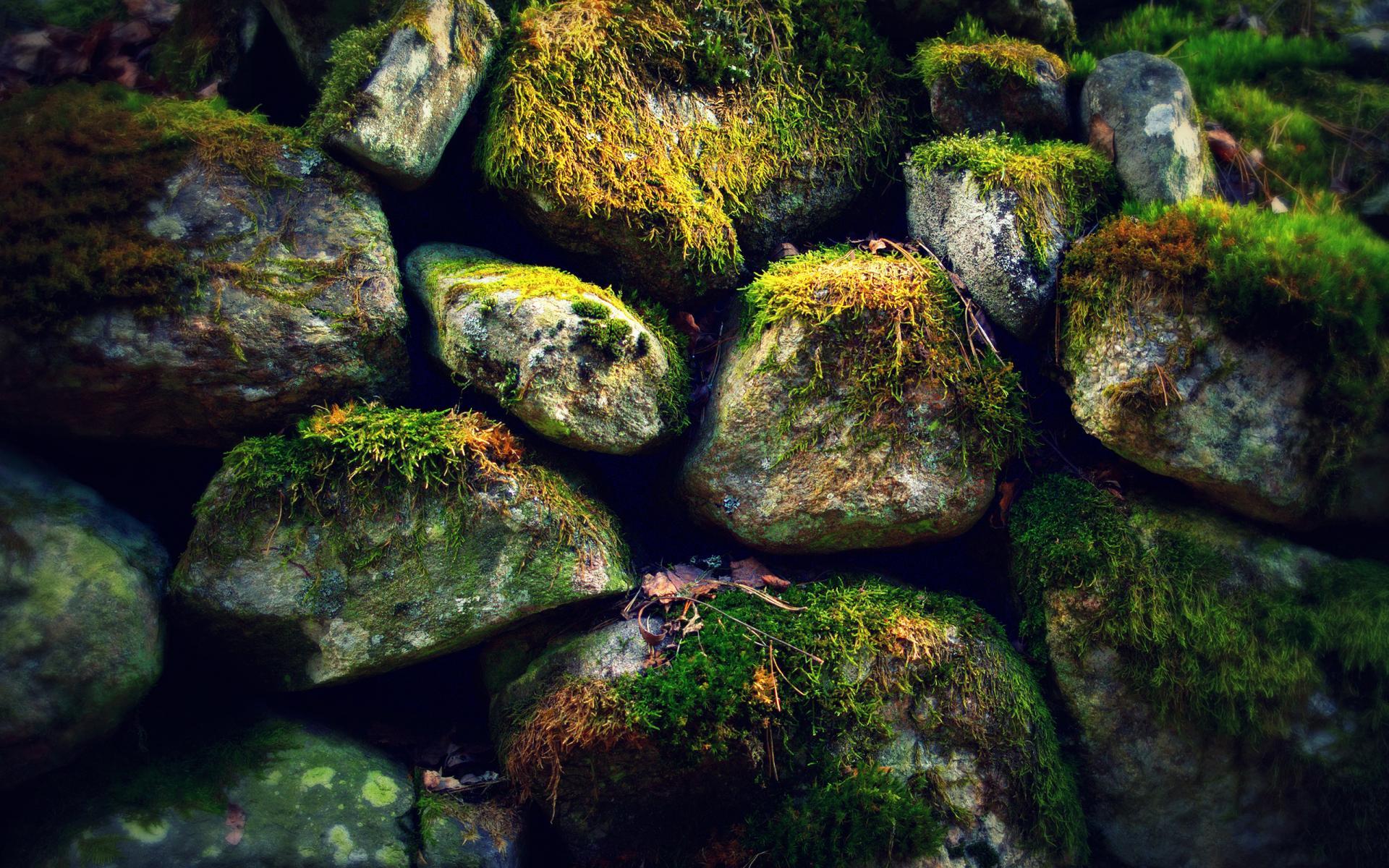 Камни, поросшие мхом