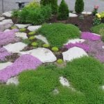 Клумба с мелкими сиреневыми цветами
