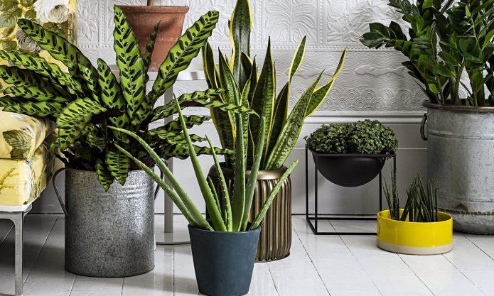 Тенелюбивые растения для комнат