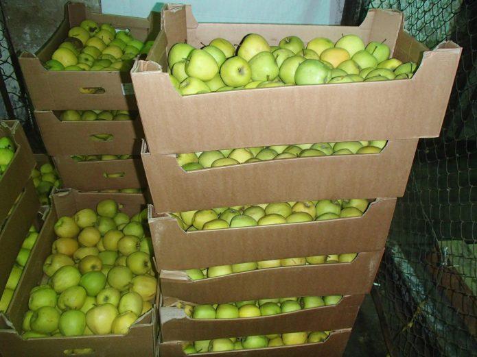 Яблоки в коробках