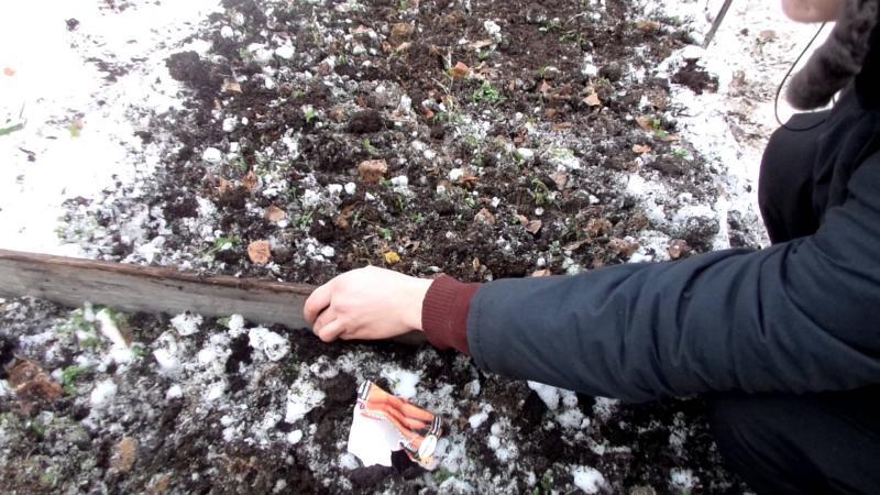 Посадка салата под зиму в открытый грунт