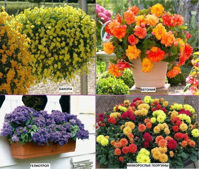 Солнцелюбивые цветы