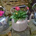 Чайники и цветы в них