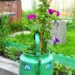 В чайнике с нарисованным на нём лицом растёт цветок
