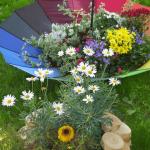 Разноцветный зонт и цветы, растущие в нём