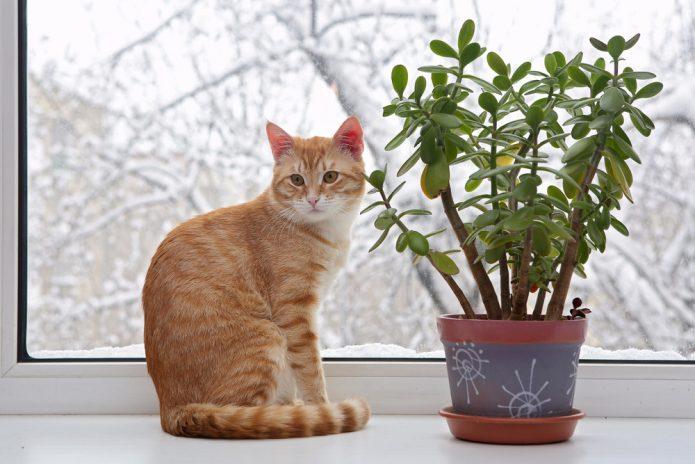 Кот и денежное дерево