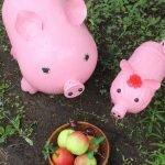 Оригинальная композиция из фигурок поросят и корзины с искусственными яблоками