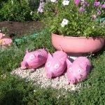 Три пластиковые свинки перед клумбой