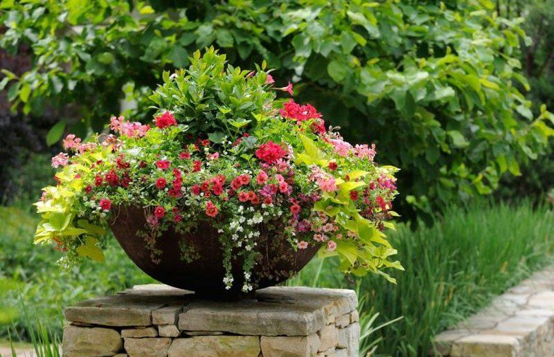 Садовый вазон с цветами