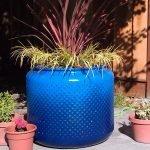 Синий барабан стиральной машины с травой и цветком в нём