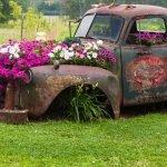 Цветы в моторном отсеке и кабине старого грузовика