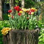 Кашпо-пень с тюльпанами