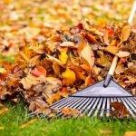 Убираем опавшую листву