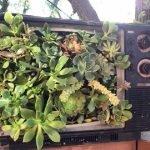 Телевизор с растениями