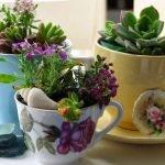 Цветы в чайных и кофейных чашках на блюдцах