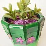 Растение-суккулент в горшке из пластмассовой бутылки