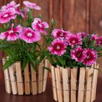 Цветы в горшках из деревянных прищепок