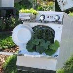 Листья кабачков и сорняки видны из окошка стиральной машины, в её ящичке растёт салат