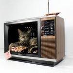 Кошка лежит на подушечке внутри отслужившего свой век телевизора
