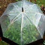 Зонт, закрывающий собой растения