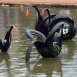 Чёрные лебеди из покрышек