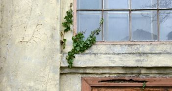 старое окно плющ