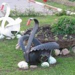 Чёрный и белый лебеди из шин