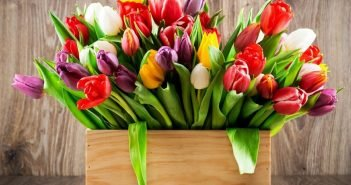 Тюльпан дома