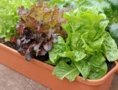 Салат в горшке