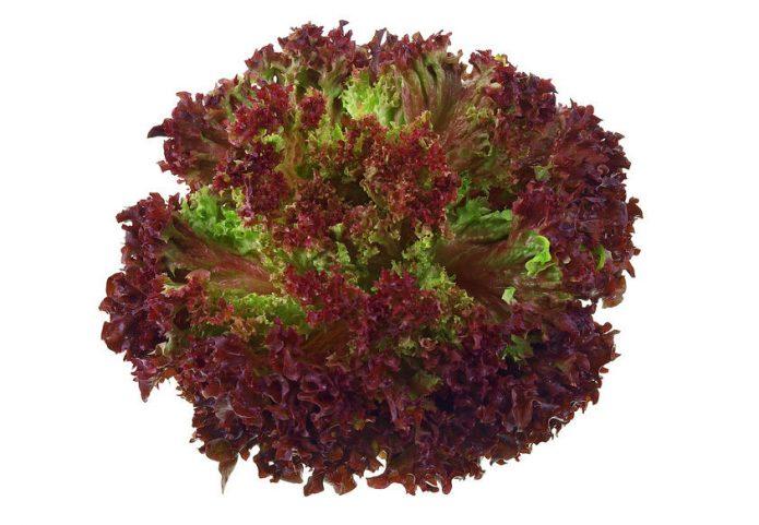Выращиваем салат на подоконнике зимой для начинающих