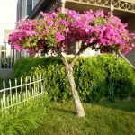 Сухое дерево, украшенное петуниями