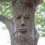 Ствол дерева с человеческим лицом