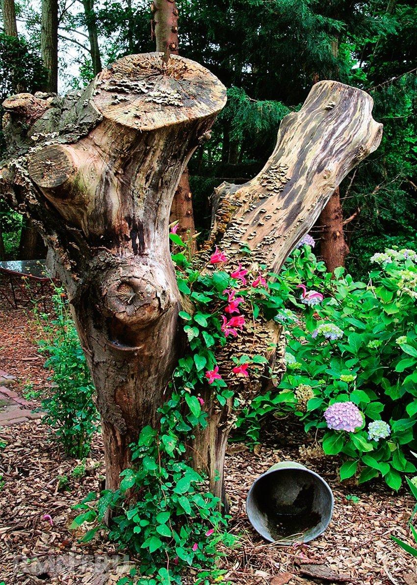 Сухое дерево с вьющимся растением