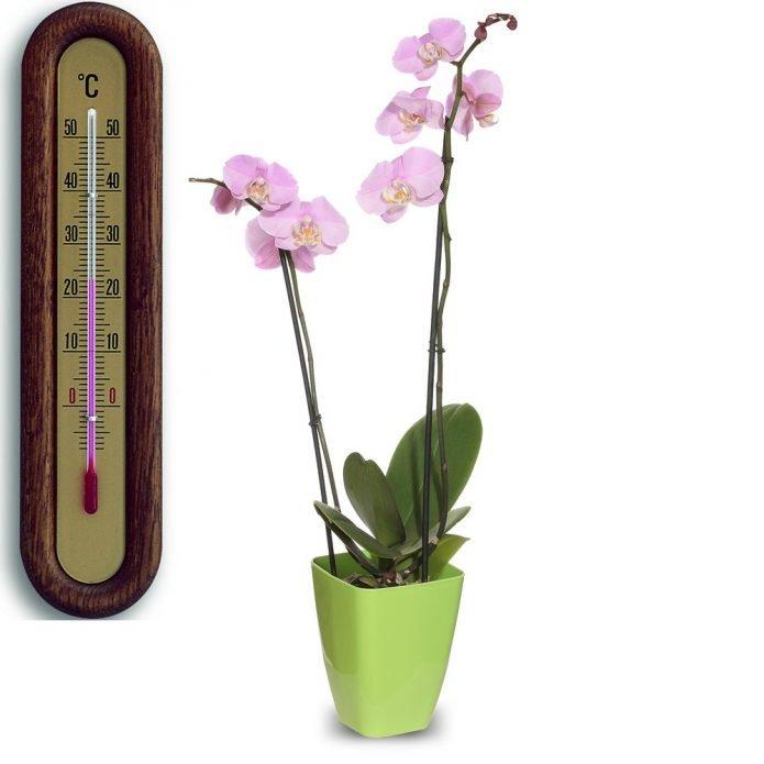 Орхидея и комнатный термометр