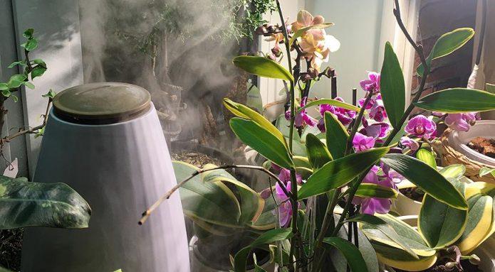 Увлажнение цветов с помощью прибора