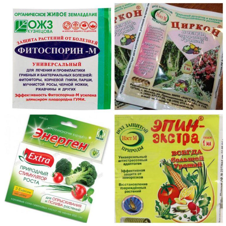 циркон или эпин для замачивания семян